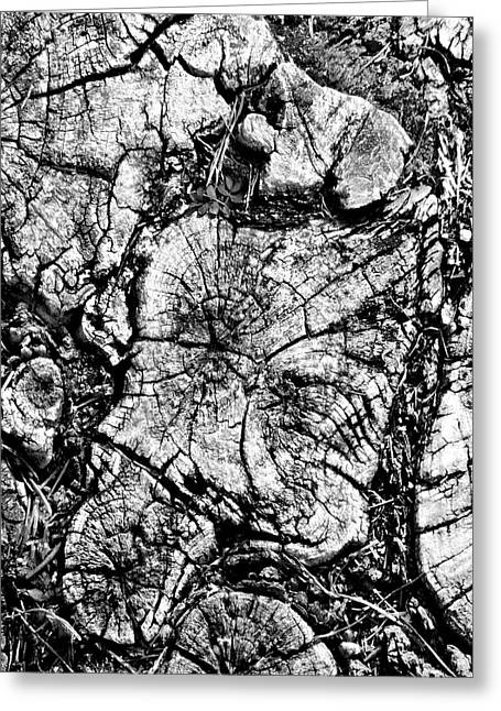 Tree Roots Digital Art Greeting Cards - Stumped Greeting Card by Mike McGlothlen