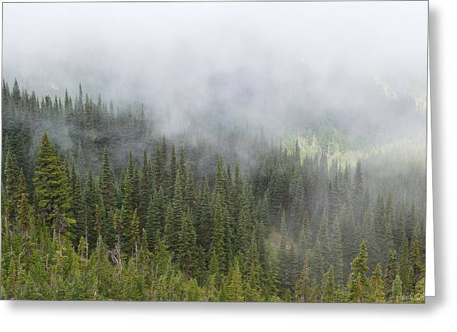Misty Pine Photography Greeting Cards - Sublime Beauty Greeting Card by Heidi Smith
