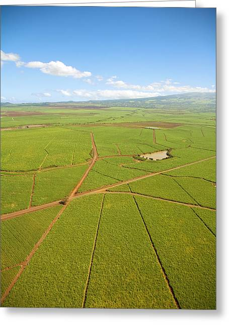 Farmers Field Greeting Cards - Sugar Cane Fields Greeting Card by Ron Dahlquist - Printscapes