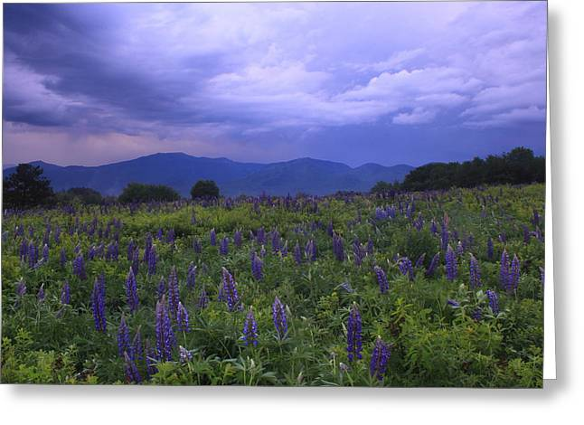 Thunderstorm Greeting Cards - Sugar Hill Lupines Thunderstorm Clearing Greeting Card by John Burk