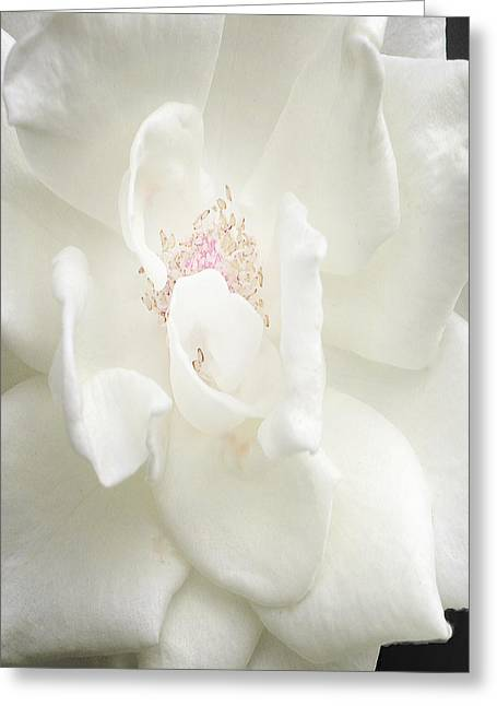 White Tapestries - Textiles Greeting Cards - Sugar Greeting Card by Kim