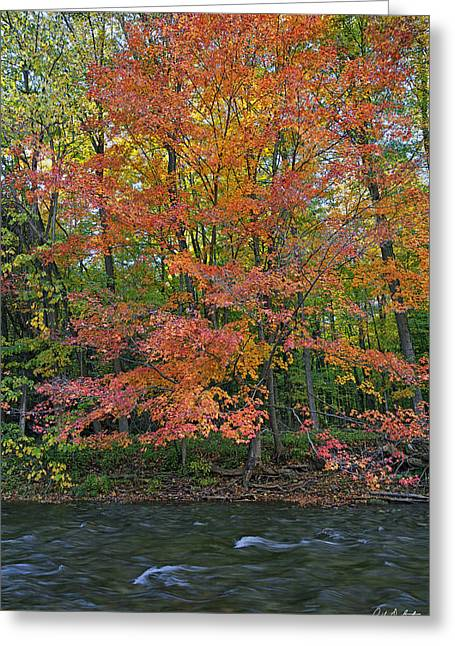 Canada Greeting Cards - Sugar Maple Greeting Card by Phill  Doherty