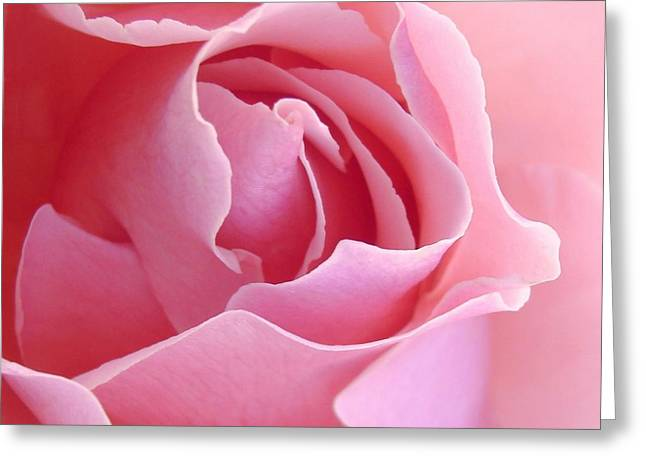 Abstract Rose Abstract Greeting Cards - Sugar of Rose Greeting Card by Jacqueline Migell