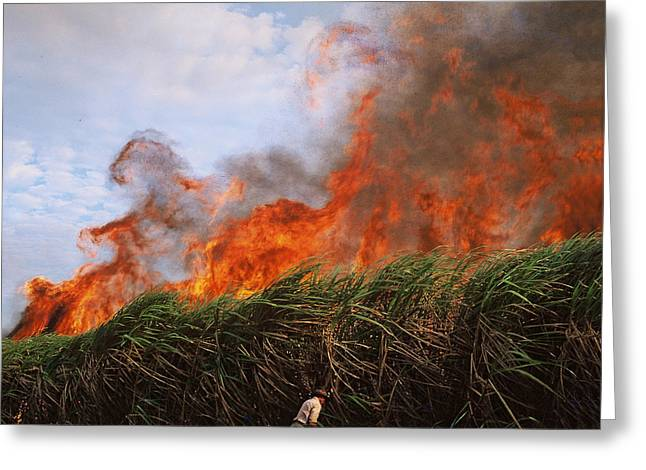 Sugar Glass Greeting Cards - Sugarcane Harvest Fire Greeting Card by Henry Molla