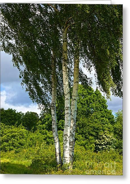 Summer Birches Greeting Card by Lutz Baar