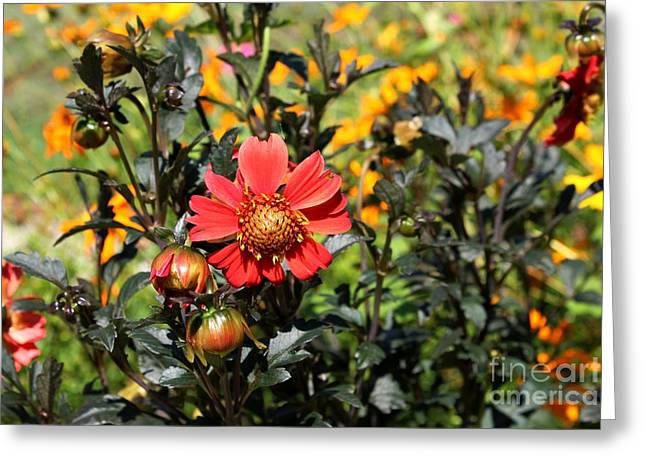 Summer Blossom Greeting Card by Theresa Willingham