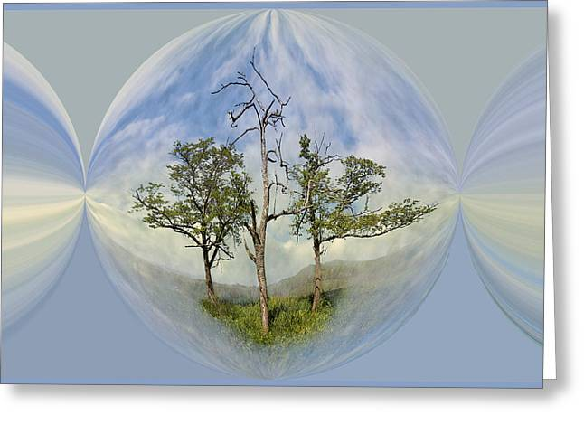 Mountaintop. Trees Greeting Cards - Summer Dreams Greeting Card by Debra and Dave Vanderlaan