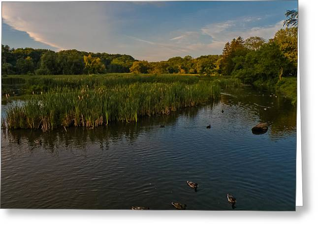 Summer Duck Pond Greeting Card by Jiayin Ma