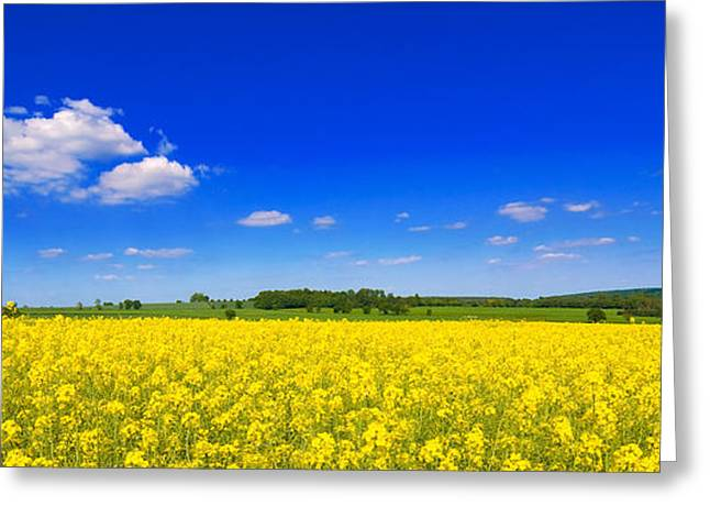 Summer Field Greeting Card by Amanda And Christopher Elwell