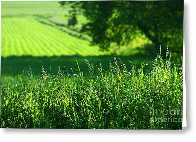 Field. Cloud Digital Art Greeting Cards - Summer fields of green Greeting Card by Sandra Cunningham