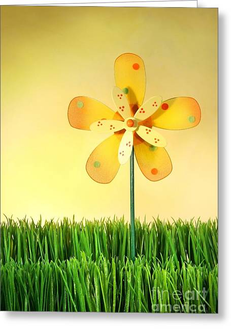 Rotation Photographs Greeting Cards - Summer fun in the grass Greeting Card by Sandra Cunningham