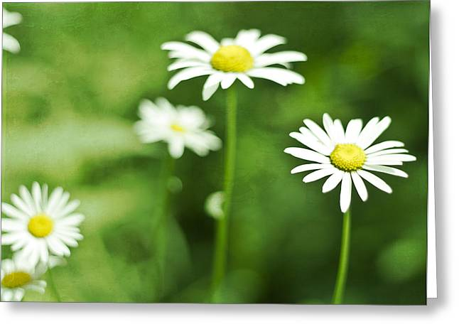 Bellis Greeting Cards - Summer Greeting Card by Nomad Art And  Design