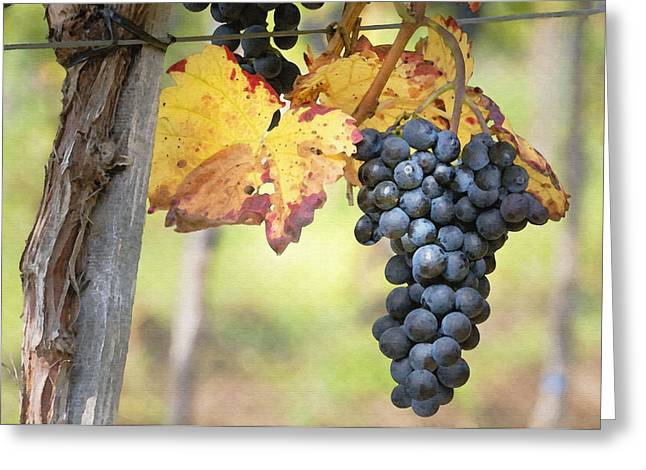 Purple Grapes Greeting Cards - Summer Grapes Greeting Card by Sharon Foster