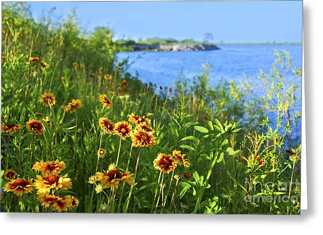Blanket Photographs Greeting Cards - Summer in Toronto park Greeting Card by Elena Elisseeva