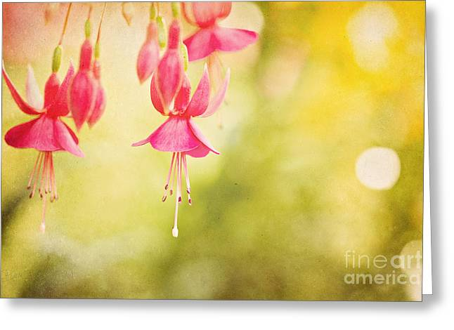 Summer Lov'n Greeting Card by Beve Brown-Clark Photography