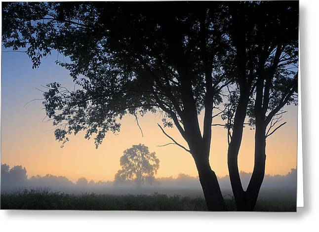 Peaceful Scene Greeting Cards - Summer Meadow at Dawn Greeting Card by Dean Pennala