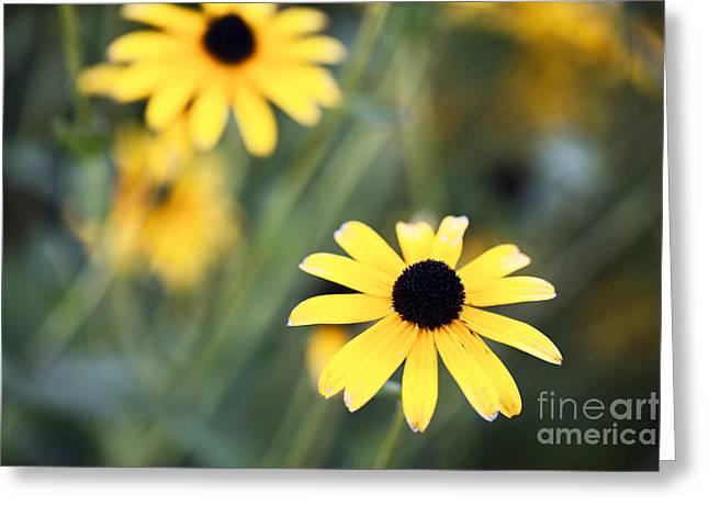 Summer Memories  Greeting Card by Leslie Leda