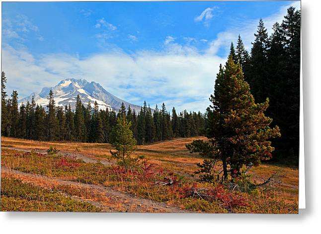 Ski Art Greeting Cards - Summer On Mt. Hood Greeting Card by Athena Mckinzie
