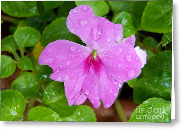 Pinks And Purple Petals Greeting Cards - Summer Rain Flower Greeting Card by Kimberly E Klein