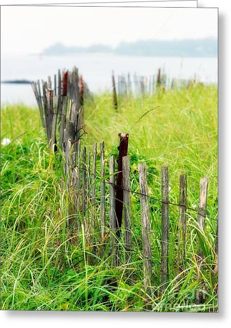 Maine Shore Greeting Cards - Summer rainy day II Greeting Card by Hideaki Sakurai