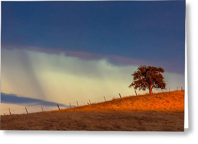 Golden Shower Greeting Cards - Summer Shower Greeting Card by Marc Crumpler