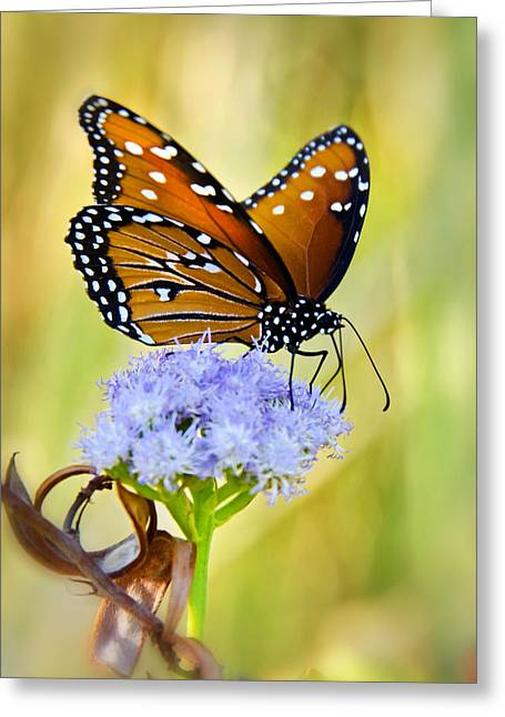Queen Butterfly Greeting Cards - Summer Spirit  Greeting Card by Saija  Lehtonen