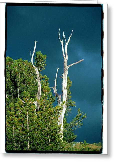 Summer Storm - Tuolumne Meadows Greeting Card by Noah Brooks