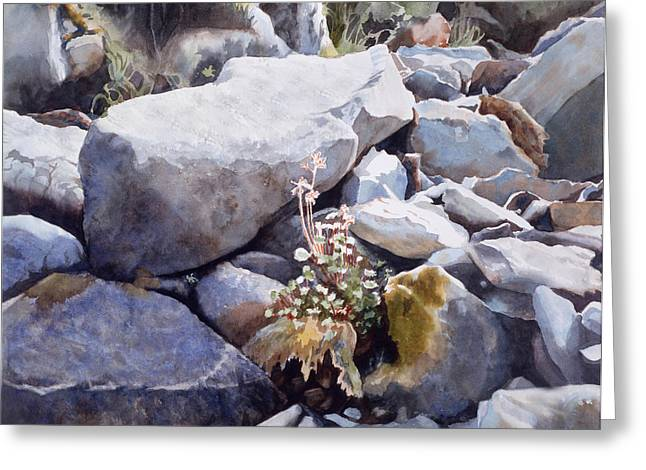 Paintng Greeting Cards - Summer Streambed Greeting Card by Sharon Freeman