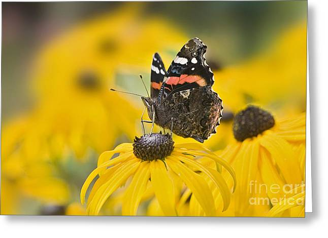 Close Focus Floral Greeting Cards - Summer Stunner Greeting Card by Jacky Parker