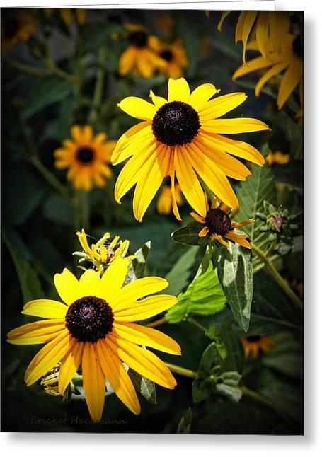 Hartsburg Greeting Cards - Summer Sunshine Greeting Card by Cricket Hackmann