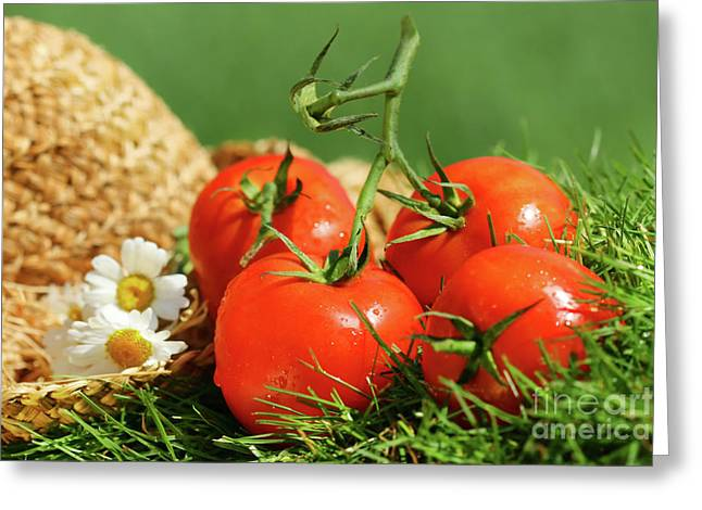 Summer tomatoes Greeting Card by Sandra Cunningham