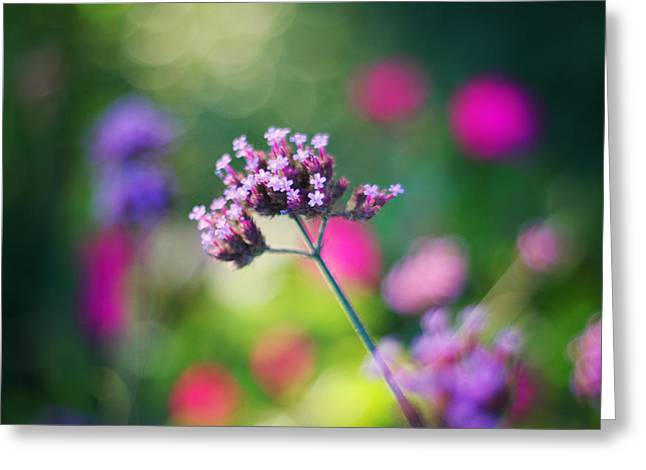 Verbena Greeting Cards - Summer Verbena Greeting Card by Amy Tyler