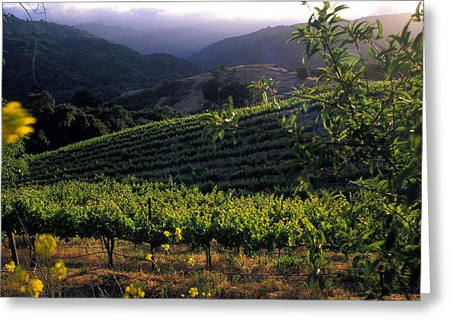 Vineyard Prints Greeting Cards - Summer Vineyard Greeting Card by Kathy Yates