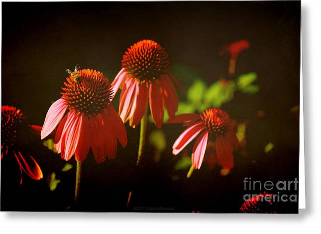 Floral Photos Greeting Cards - Summer Visitor Greeting Card by Lisa Holmgreen