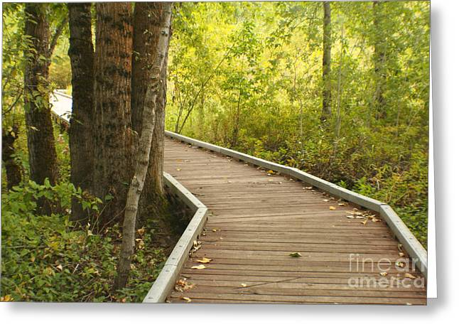 Destiny Greeting Cards - Summer Walk Greeting Card by Idaho Scenic Images Linda Lantzy