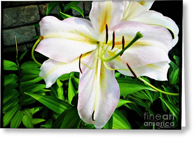 Candidum Greeting Cards - Summer White Madonna Lily Greeting Card by Joan  Minchak