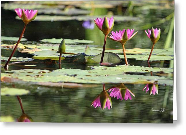 Water Garden Greeting Cards - Summertime Magic Greeting Card by Suzanne Gaff