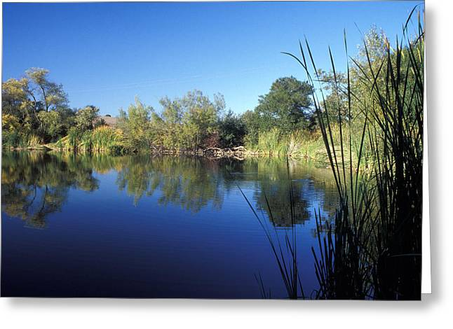 Summertime Reflections Greeting Card by Kathy Yates