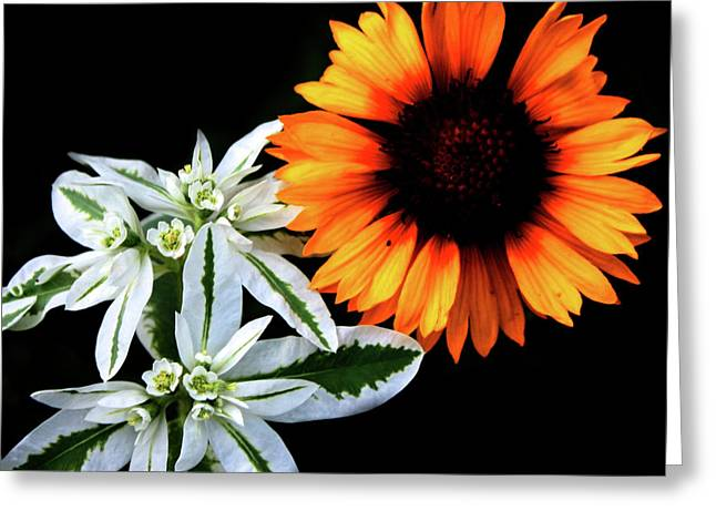Abstract Digital Photographs Greeting Cards - Sun and Day Greeting Card by Jerry Cordeiro