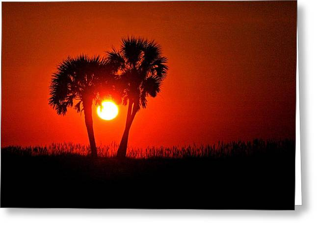Crimson Tide Greeting Cards - Sun Between 2 Palms Greeting Card by Michael Thomas