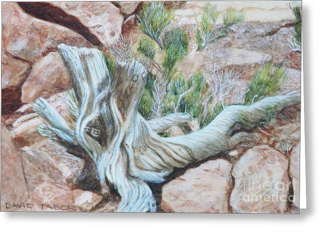 Sun Bleached Greeting Cards - Sun-bleached Tree on Red Rocks Greeting Card by David Tabor