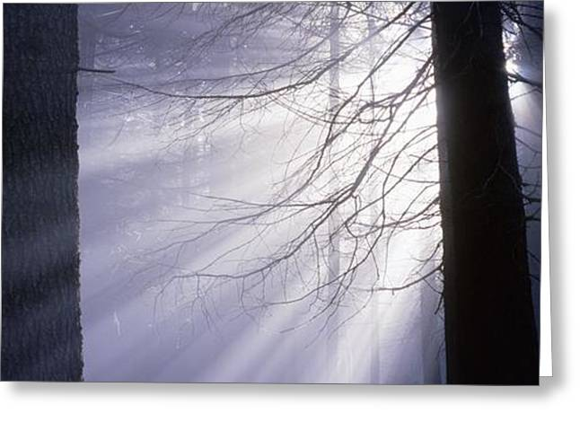 Sun Breakthrough Greeting Cards - Sun breaking through mists Greeting Card by Intensivelight