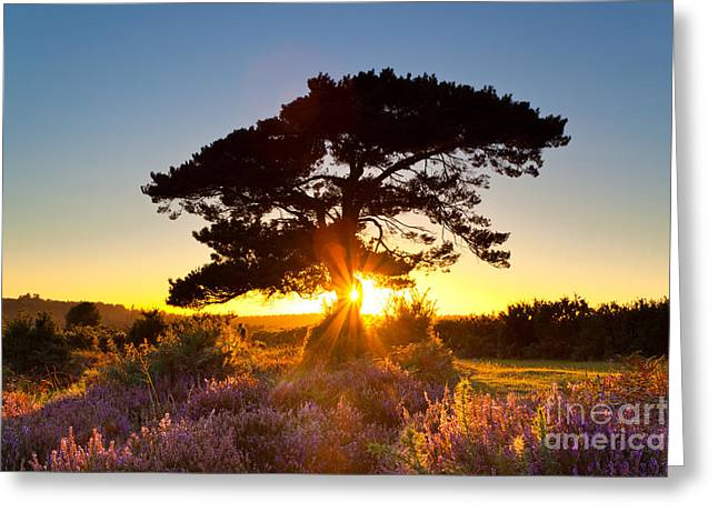 New Britain Greeting Cards - Sun burst at Bratley View Greeting Card by Richard Thomas