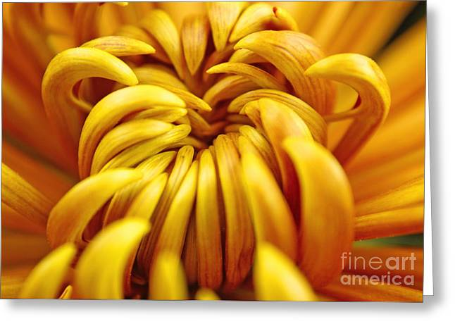 Yellow Flowers Framed Prints Greeting Cards - Sun Burst Greeting Card by Christopher  Ward
