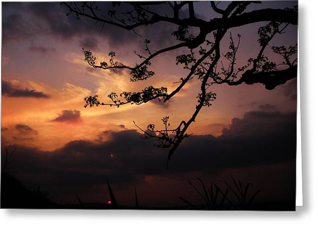 Sun Caught By Branches  Greeting Card by Rosvin Des Bouillons