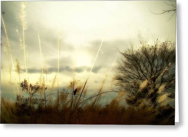 Soft Light Digital Art Greeting Cards - Sun Fade Greeting Card by Gothicolors Donna Snyder