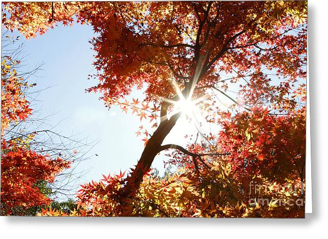 Autumn Photographs Greeting Cards - Sun in forest Greeting Card by Les Cunliffe