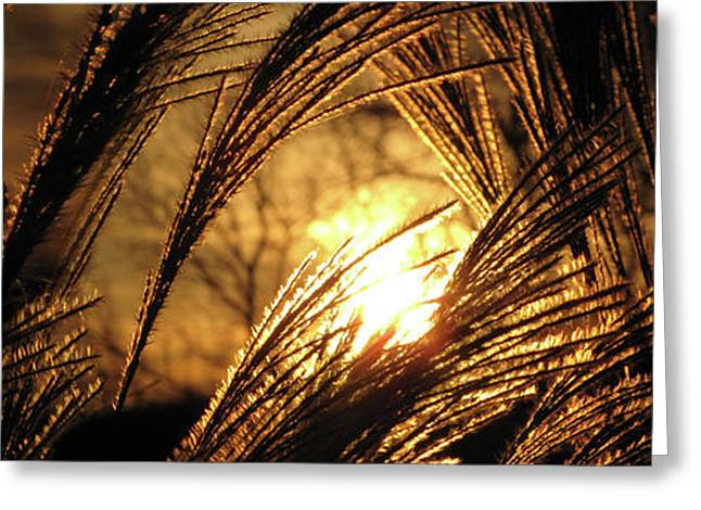 Sunset Prints Photographs Greeting Cards - Sun in Grass panoramic Greeting Card by Amy Tyler