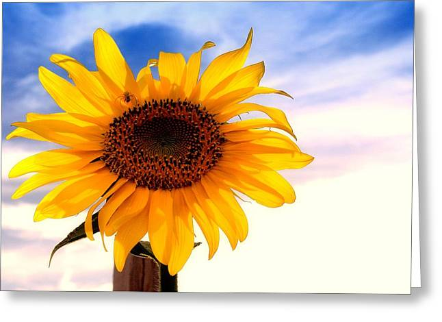 Lynnette Johns Greeting Cards - Sun In The Sky Greeting Card by Lynnette Johns