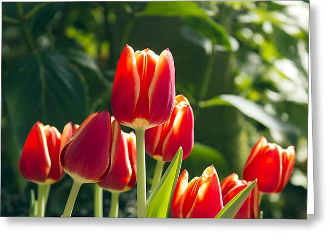 Flower Display Greeting Cards - Sun Kissed Greeting Card by Peter Chilelli